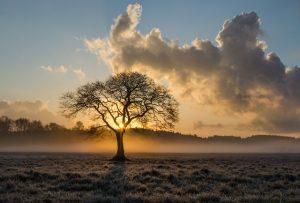 Lees meer over het artikel Waarom moet een boom soms gekapt worden?