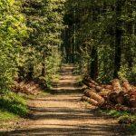 FSC certificering voor verantwoord bosbeheer