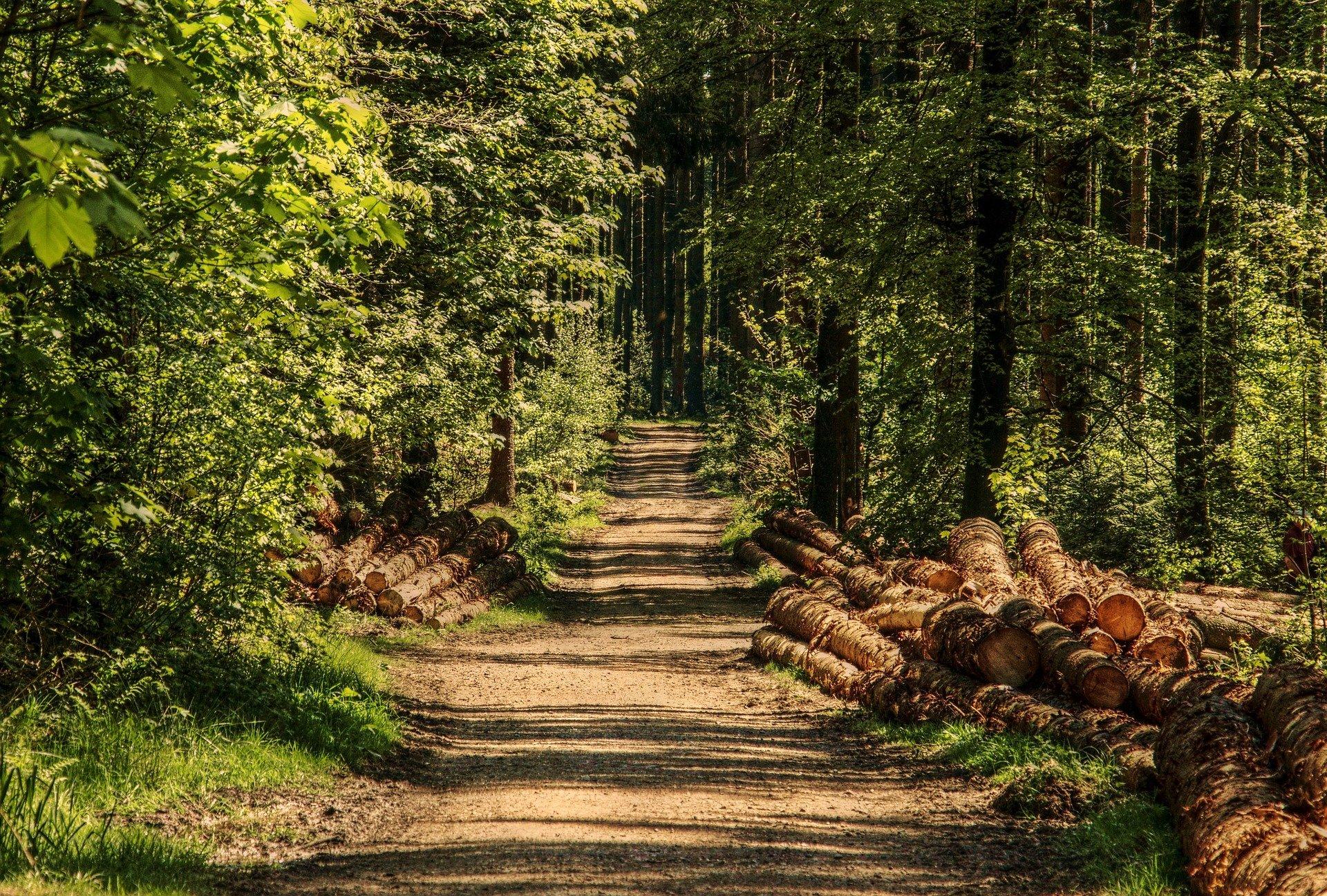 Lees meer over het artikel FSC certificering voor verantwoord bosbeheer